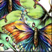 OU-80913-Pastel-Butterfly-No2--40x30